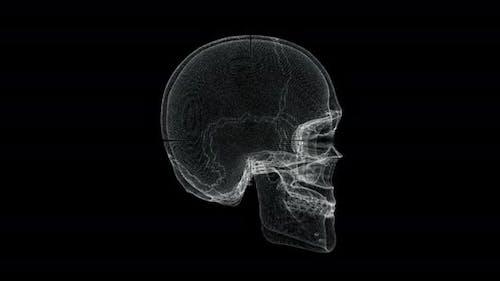 Hologram Screen of Skull Bone