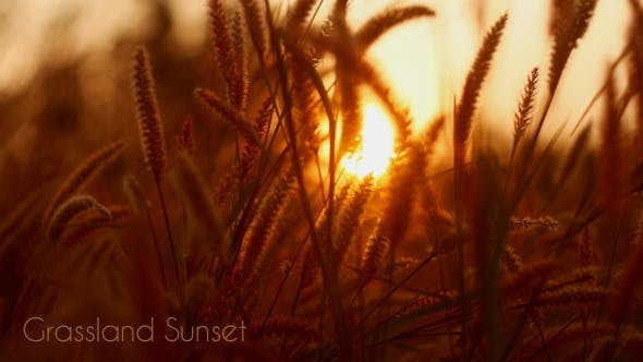 Thumbnail for Grassland Sunset