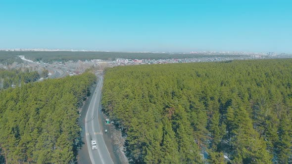 Pictorial Green Dense Pine Forest Surround Stretching Road