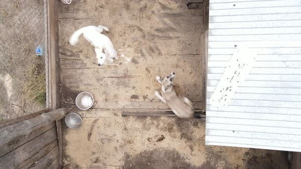 Dogs at the Shelter. Aerial View Slow Motion