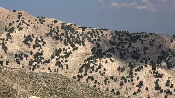 Rare Trees On Arid Stony Mountain Slope