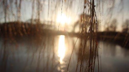 Blick durch Weide