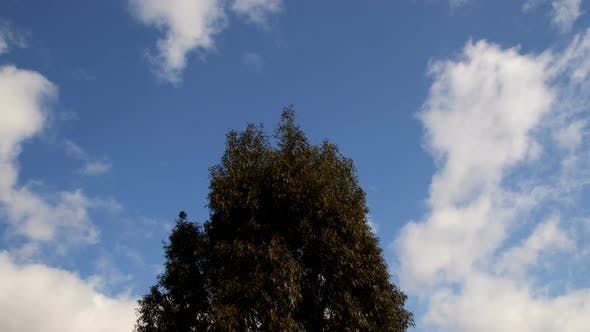 Thumbnail for The Tree And Clouds On Sky