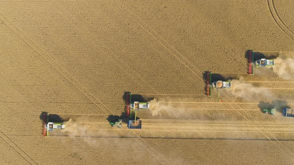 Thumbnail for Combine Harvester Harvesting Wheat Crop In Field. Aerial Drone View From Above