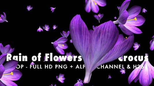 Thumbnail for Rain of Flowers - Blue Crocus - Pack of 2