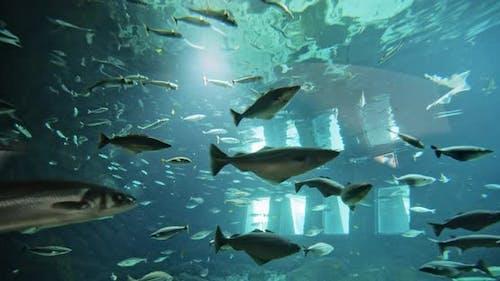 Shoals Of Fish In Aquarium
