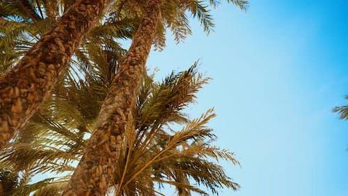 Palmiers au coucher du soleil Lumière et Ciel