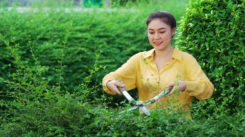 young woman using big scissors cutting and trimming plant in garden at home