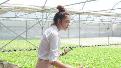 woman farmer holding tablet check order purchasing feel relax and happy looking at plant.