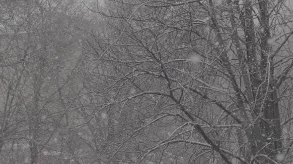 Thumbnail for Chutes de neige dans la ville pendant la journée. Kiev. L'Ukraine. Ralenti