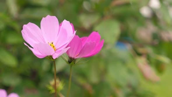 Pink Beautiful Flowers Growing in the Garden