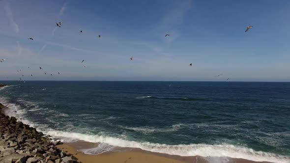 Thumbnail for Flock of Seagulls Fly over the Sea