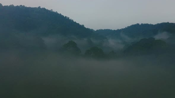 Thumbnail for Drone Flight over Arcane Mysterious Rainforest in Twilight