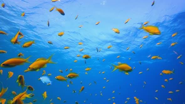 Thumbnail for Marine Life Tropical Fish Garden