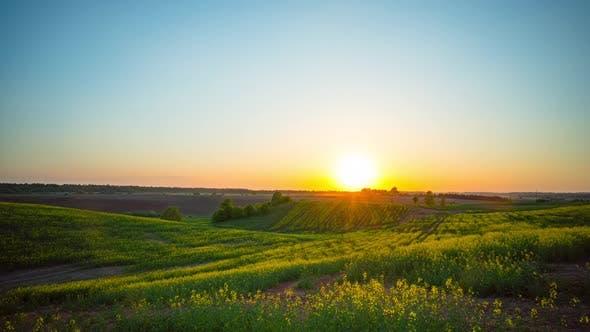 Thumbnail for Sunset over rapeseed fields
