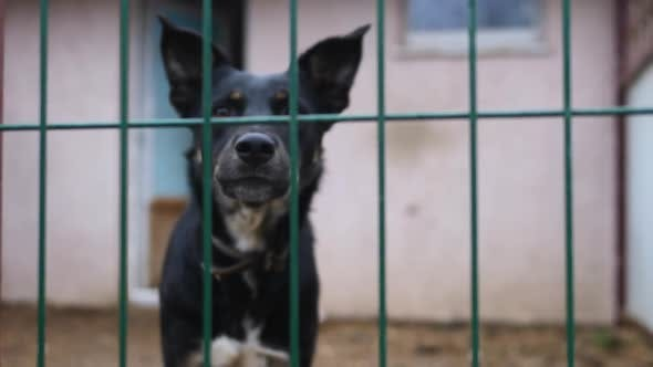 Thumbnail for Closeup Of Barking Stray Dog Caged In Animal Shelter