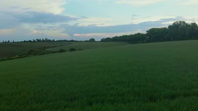 Agriculture Green Field
