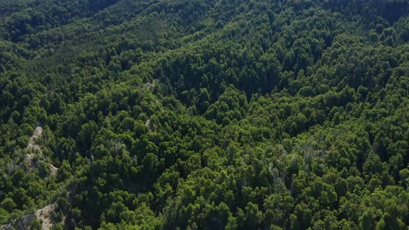 Thumbnail for Drone Over Large Forest And Stream