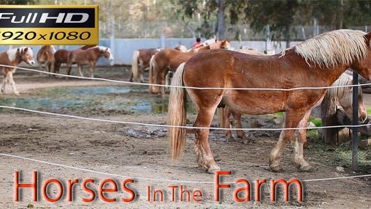 Thumbnail for Horse Farm