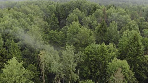 Drone Point of View Over the Tops of Misty Evergreen Trees in Cloudy Weather