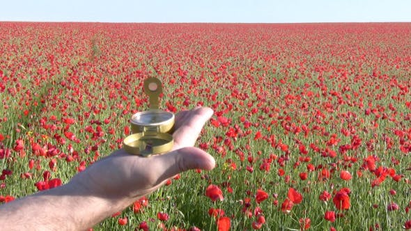 Thumbnail for Targeting On A Poppy Field