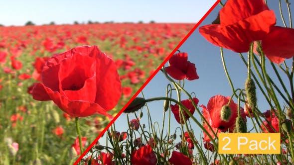 Thumbnail for Poppy Field (2-Pack)