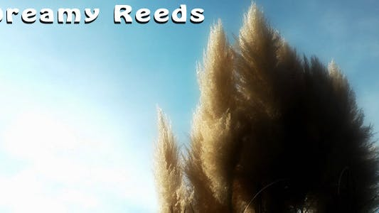 Thumbnail for Dreamy Reeds