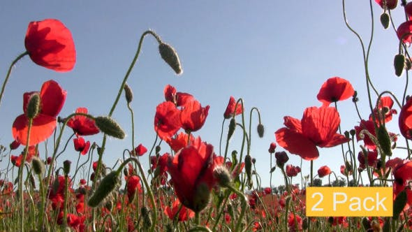 Thumbnail for Red Poppies And Sun (2-Pack)