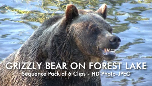Thumbnail for Bear On Lake - Pack of 6