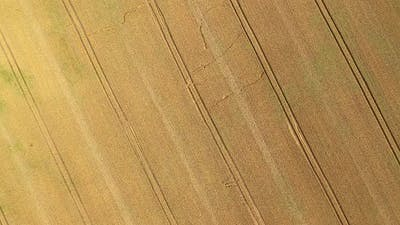 Aerial Zoom Wheat Field Background