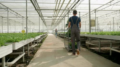 Farmer in a Greenhouse with Modern Technology for Growing Vegetables