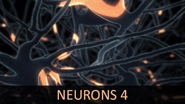 Neurons 4