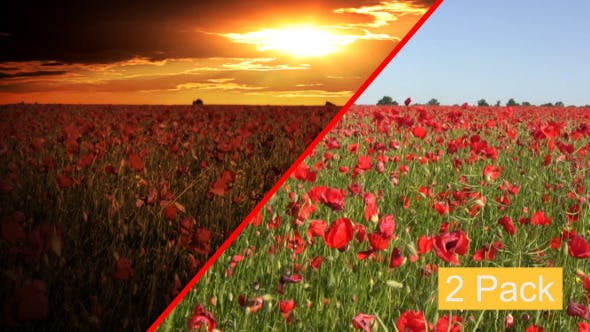 Thumbnail for Dramatic Sky Over The Poppy Fields (2-Pack)