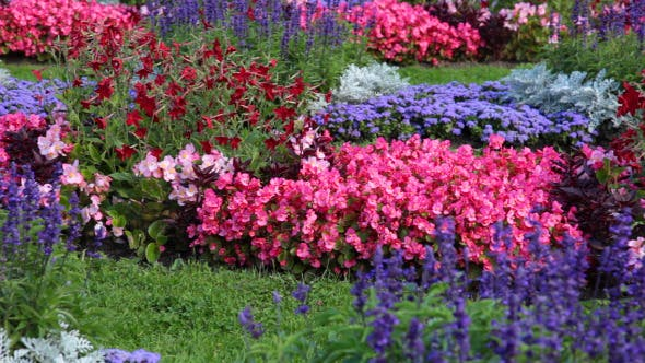 Thumbnail for Flowerbed With Different Flowers