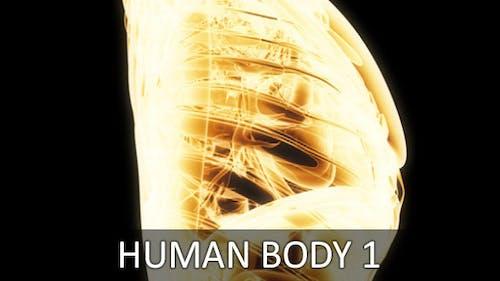 Human Body 1 (2-Pack)