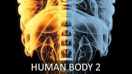 Human Body 2 (2-Pack)