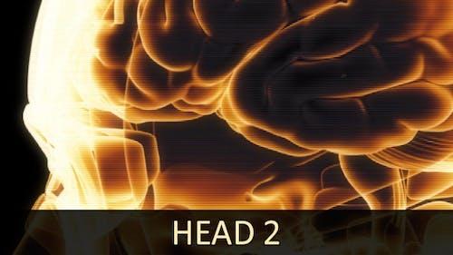 Head 2 (2-Pack)