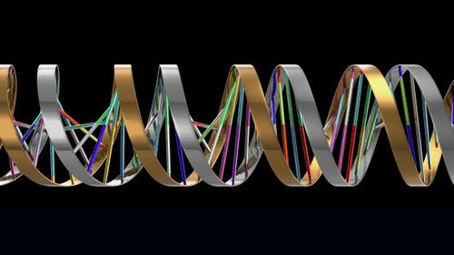 DNA 2 (3-Pack)
