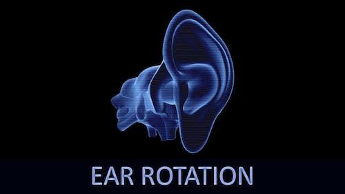 Ear Rotation (3-Pack)