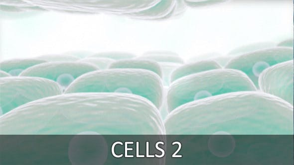 Cells 2 (2-Pack)