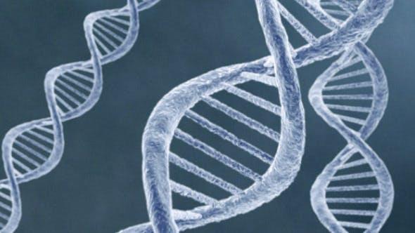 DNA 4 (4-Pack)