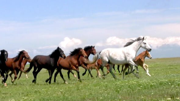 Herd And Steppe