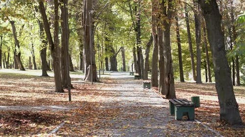 View of Calm Autumn Park Alley with Benches