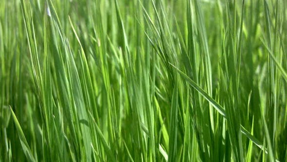 Thumbnail for Background With Grass