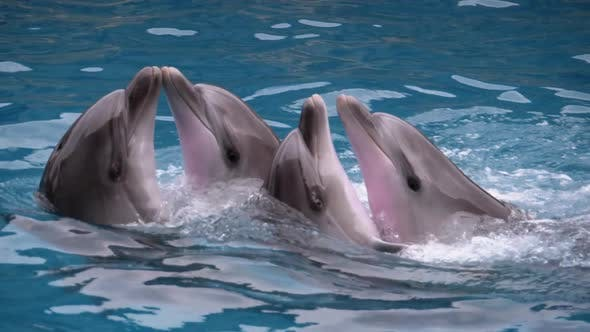 Dolphins Are Dancing in Dolphinarium in the Pool, Dolphin Show, Slow Motion