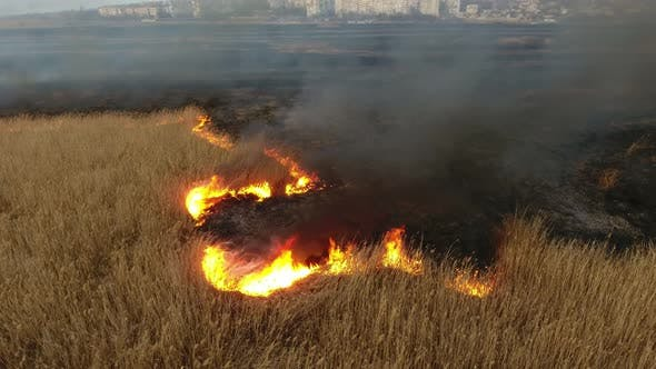Thumbnail for Aerial Shot of Flaming Cane and Sedge Marshes in the Dnipro River Basin in Spring