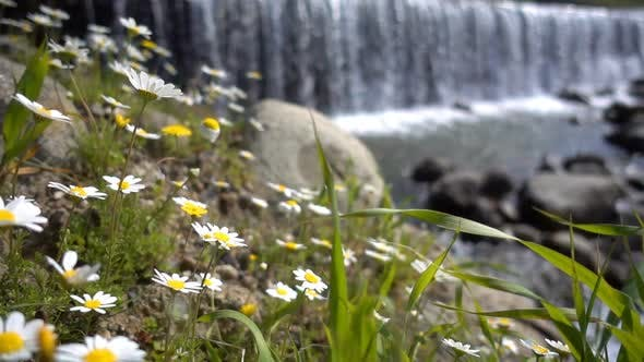 Thumbnail for Daisy Flower And Waterfall Behind 4