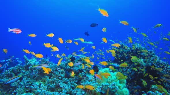 Thumbnail for Tropical Fish Coral Reef