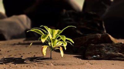 Green Plant at Sand Beach