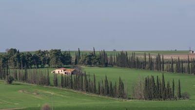 Timelapse of wind waving trees in rural area
